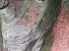 berdorf mullerthal rochers (11)